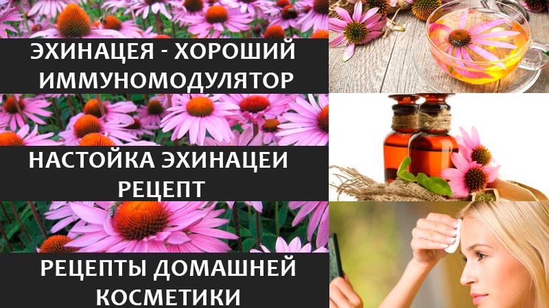 Эхинацея - здоровье и красота