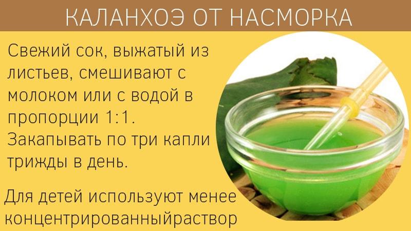 Каланхоэ - применение в лечебных и косметических целях