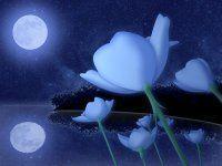 Лунные дни и Ароматы