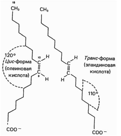 Транс жирна кислота